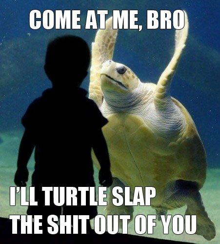 come-at-me-bro-i-will-turtle-slap-the-shit-out-of-you.jpg